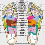 Mapa de reflexología podal